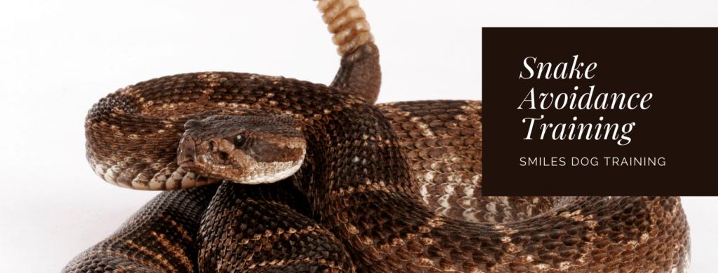 snake avoidance training banner